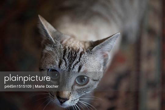 plainpicture | Photo library for authentic images - plainpicture p445m1515109 - Cat's eyes - plainpicture/Marie Docher