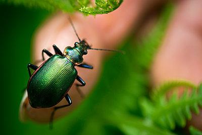 Bug - p1169m1463437 by Tytia Habing
