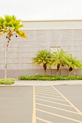 Parking space and palms - p9070061 by Anna Fritsch