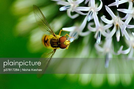 p37817284 von Nisha Keshav