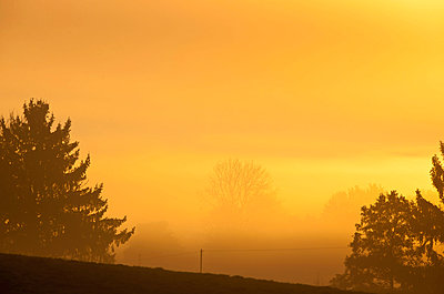 Yellow morning - p533m970765 by Böhm Monika