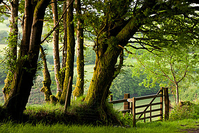 Public bridleway through trees and countryside in spring - p8714126 by Adam Burton