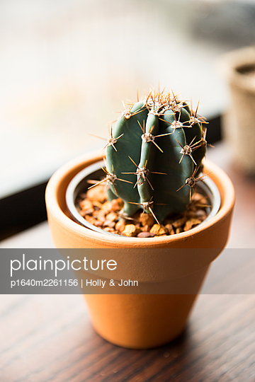 Cactus in flowerpot - p1640m2261156 by Holly & John