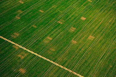 Aerial view of corn fields, Croatia - p1026m992070f by Romulic-Stojcic