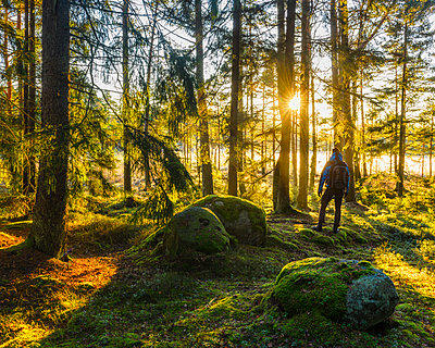Forest at autumn - p312m1533068 by Mikael Svensson