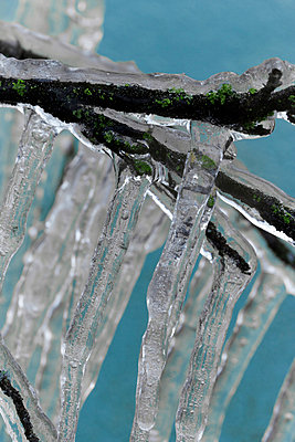 Branches covered with ice - p4150470 by Tanja Luther