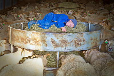 Little boy in sheep shelter - p937m709977 by Karolina Doleviczenyi