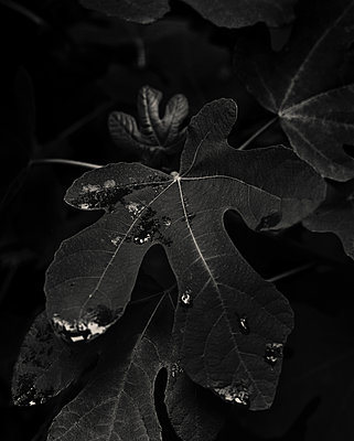 Leaf - p1088m937944 by Martin Benner