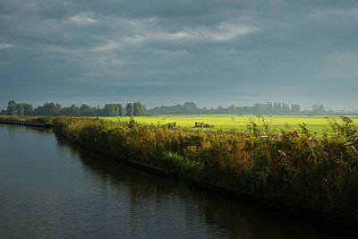 Meadows and reed in Frisian lake district, Netherlands - p429m1206941 by Mischa Keijser