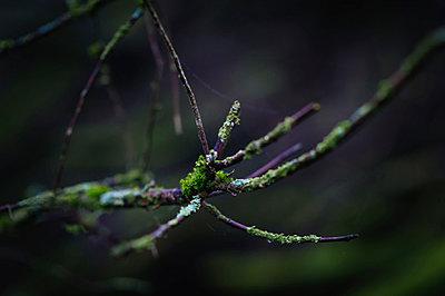 Moss - p1088m903554 by Martin Benner