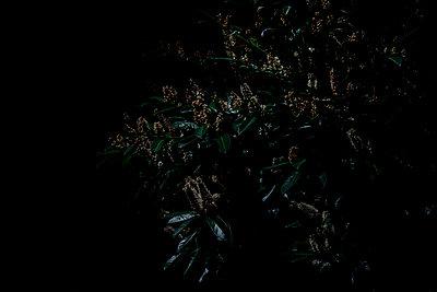 Moonlight II - p1523m2278210 by Nic Fey