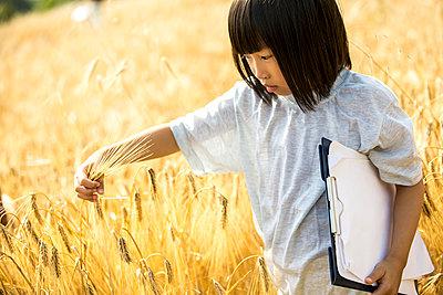 Little girl examining wheat in field - p300m2160755 von Fotoagentur WESTEND61