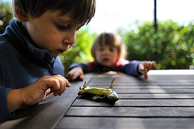 Kinder untersuchen eine Eidechse - p8290142 von Régis Domergue