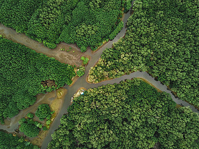 Aerial view of the mangrove forest - p1166m2111635 by Cavan Images