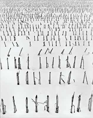 Stoppelacker Winter Schnee - p1312m1207401 von Axel Killian