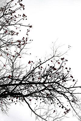 Rote Beeren - p450m1010404 von Hanka Steidle