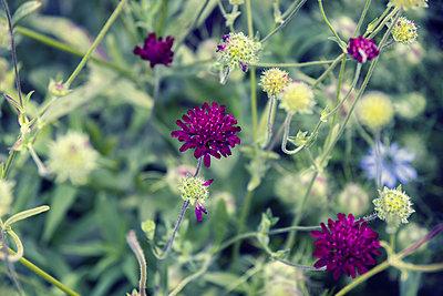 Wiesenblumen - p879m2054868 von nico
