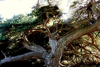 Knotty pine - p972m1136659 by Felix Odell