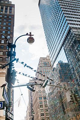 Tauben in New York - p171m1159004 von Rolau