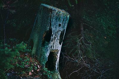Tree trunk at dusk - p5750185 by Stefan Ortenblad