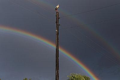 Rainbow and stork - p1063m1193654 by Ekaterina Vasilyeva