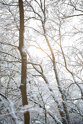 Snow covered trees - p1142m1496421 by Runar Lind