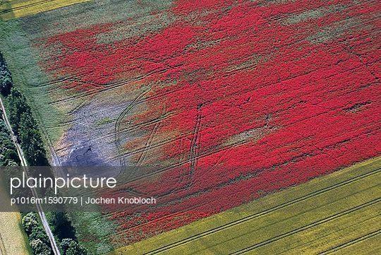 Klatschmohn in Rapsfeld - p1016m1590779 von Jochen Knobloch
