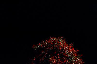 Topiary - p1199m1060129 by Claudia Jestremski