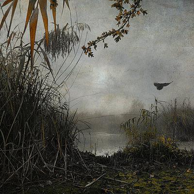 Hiding in the Swamp - Part III - p1633m2289758 by Bernd Webler