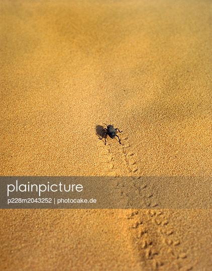 p228m2043252 by photocake.de