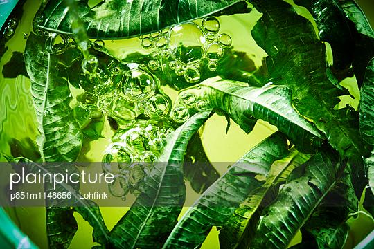 Grüne Blätter und Wasser - p851m1148656 von Lohfink