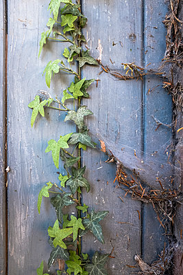 Over grown door - p1228m1332847 by Benjamin Harte
