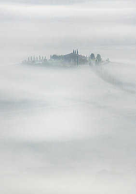 Morning Mist - p1256m2098942 by Sandra Jordan