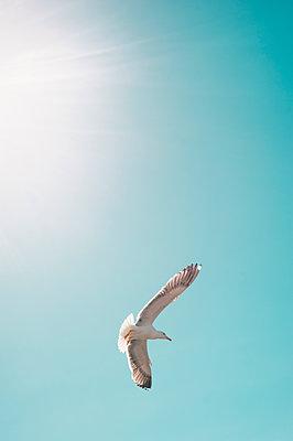 Möwe am Himmel - p1609m2199692 von Katrin Wolfmeier