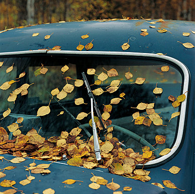 Windscreen full of leafs - p4690743 by Peter Gerdehag