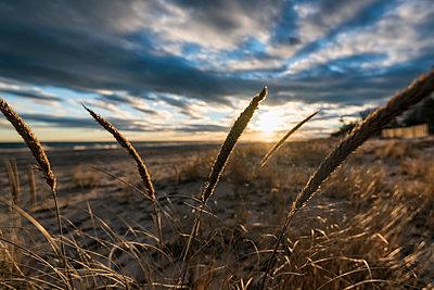 Tall grass on beach at sunset - p555m1232007 by Patrick Lienin