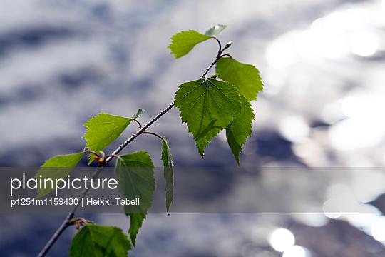 p1251m1159430 von Heikki Tabell