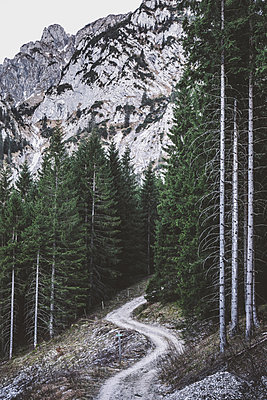 Der Wald - p1042m1194571 von Cardinale