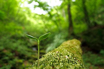 Sprouting leaf, Tokyo, Japan - p307m1535074 by Tetsuya Tanooka