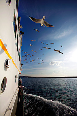seagulls flying behind the ferry - p343m992125 by Murat Timuremre