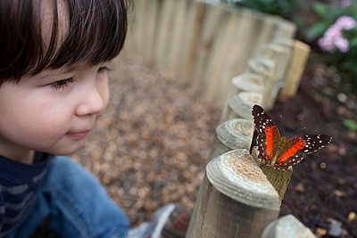 Butterfly - p535m912010 by Michelle Gibson
