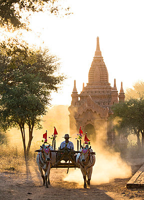 Bullock cart on a dusty track among the temples of Bagan with light from the setting sun shining through the dust, Bagan - p871m819375 by Lee Frost