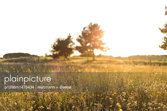 Sommerwiese am Abend - p1396m1475434 von Hartmann + Beese