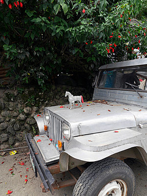Jeepney, Philippinen - p1021m1042915 von MORA