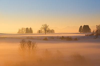 Germany, Gebrazhofen, hazy winter landscape at dawn - p300m1228785 by Martin Siepmann