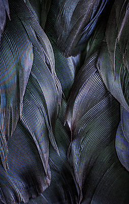 Bird feathers - p971m1216611 by Reilika Landen