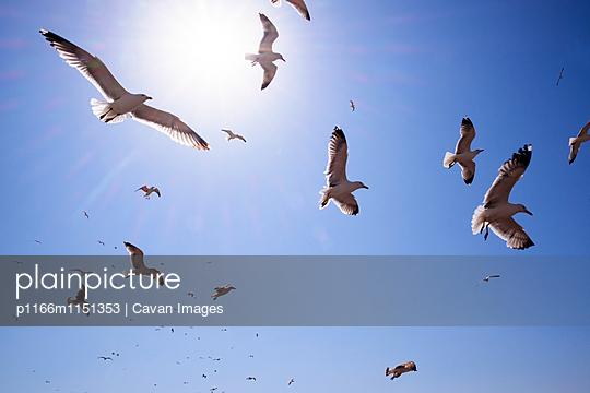 p1166m1151353 von Cavan Images