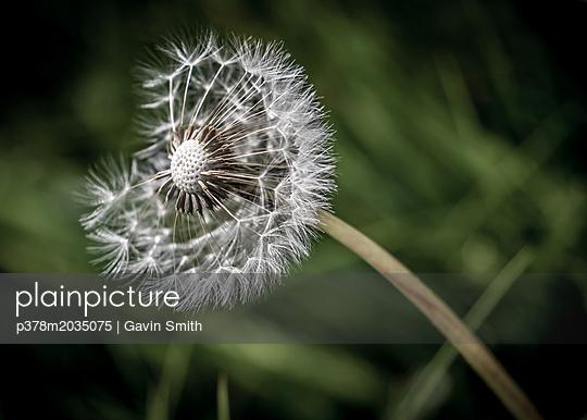 p378m2035075 von Gavin Smith
