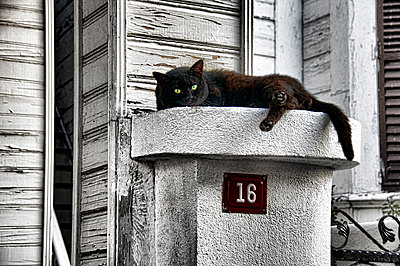 Black cat takes a rest - p1445m2125936 by Eugenia Kyriakopoulou