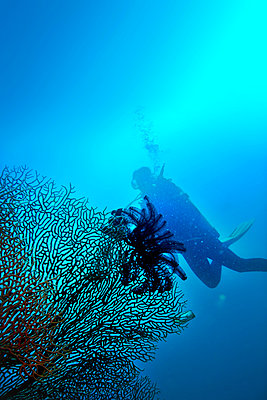 Diver and sea fan coral - p375m893361 by whatapicture